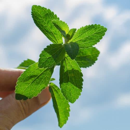 So, why Stevia?
